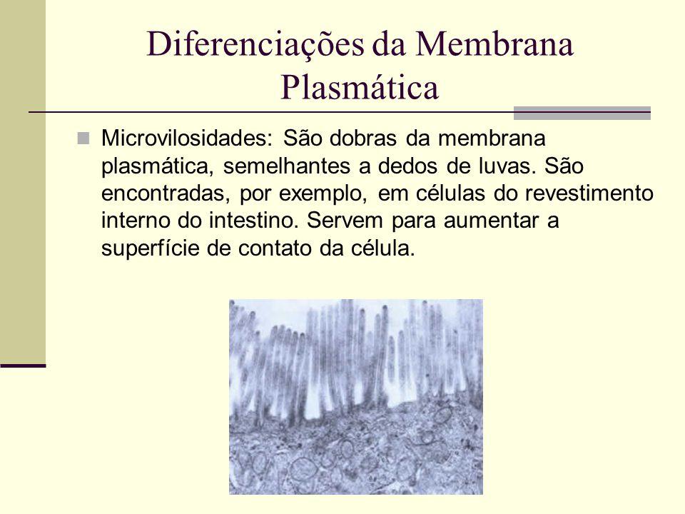 Diferenciações da Membrana Plasmática Microvilosidades: São dobras da membrana plasmática, semelhantes a dedos de luvas.