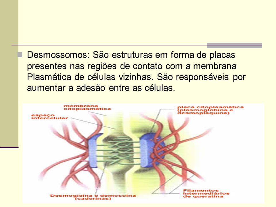 Desmossomos: São estruturas em forma de placas presentes nas regiões de contato com a membrana Plasmática de células vizinhas.