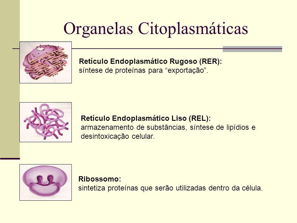 Organelas Citoplasmáticas Retículo Endoplasmático Rugoso (RER): síntese de proteínas para exportação.