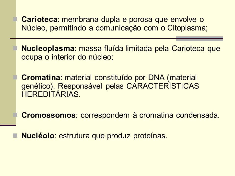 Carioteca: membrana dupla e porosa que envolve o Núcleo, permitindo a comunicação com o Citoplasma; Nucleoplasma: massa fluída limitada pela Carioteca que ocupa o interior do núcleo; Cromatina: material constituído por DNA (material genético).