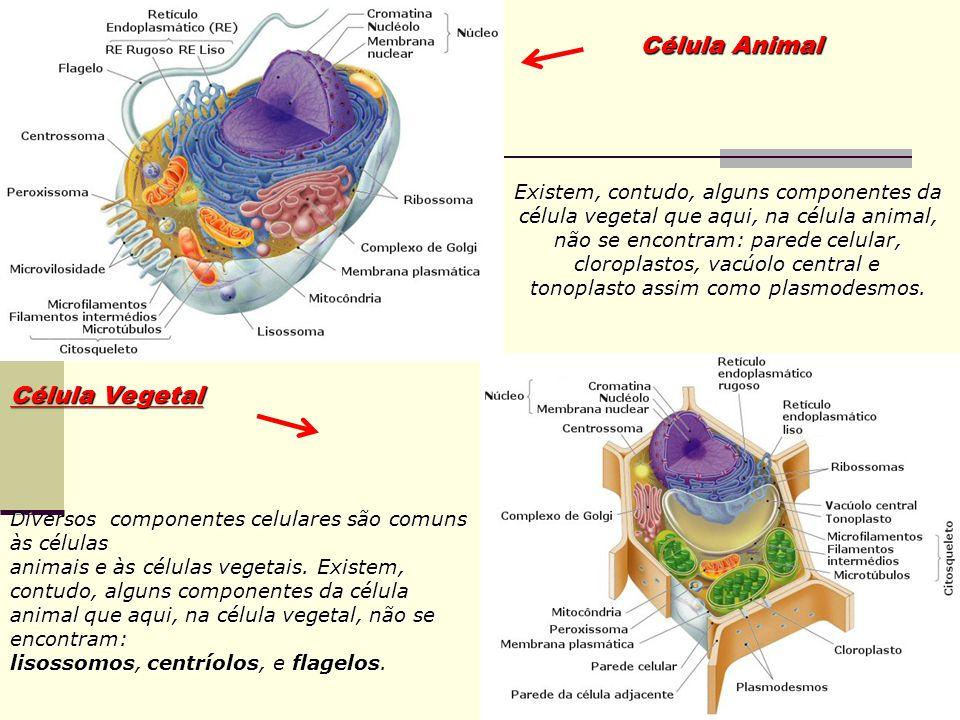 Célula Vegetal Diversos componentes celulares são comuns às células animais e às células vegetais.