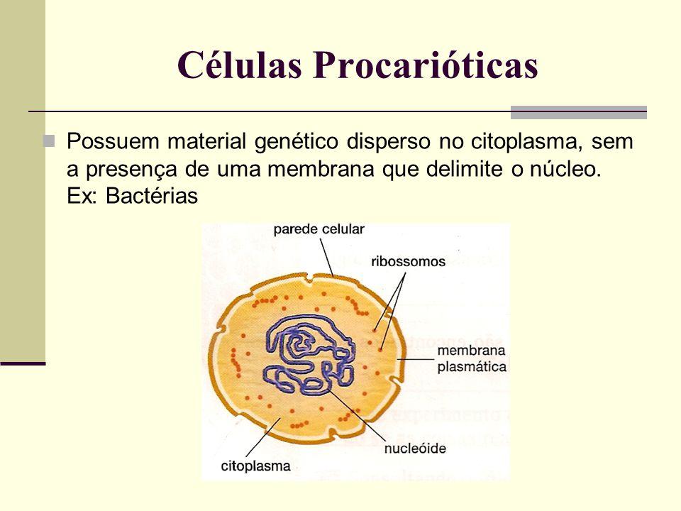 Células Procarióticas Possuem material genético disperso no citoplasma, sem a presença de uma membrana que delimite o núcleo.