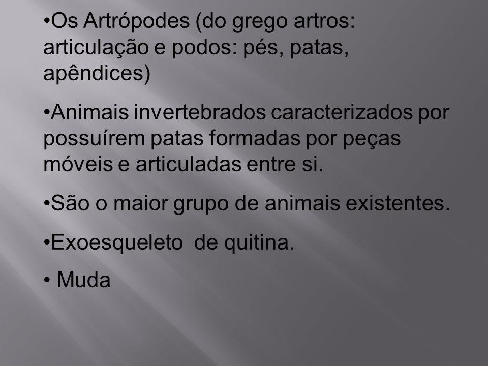 Os Artrópodes (do grego artros: articulação e podos: pés, patas, apêndices) Animais invertebrados caracterizados por possuírem patas formadas por peça