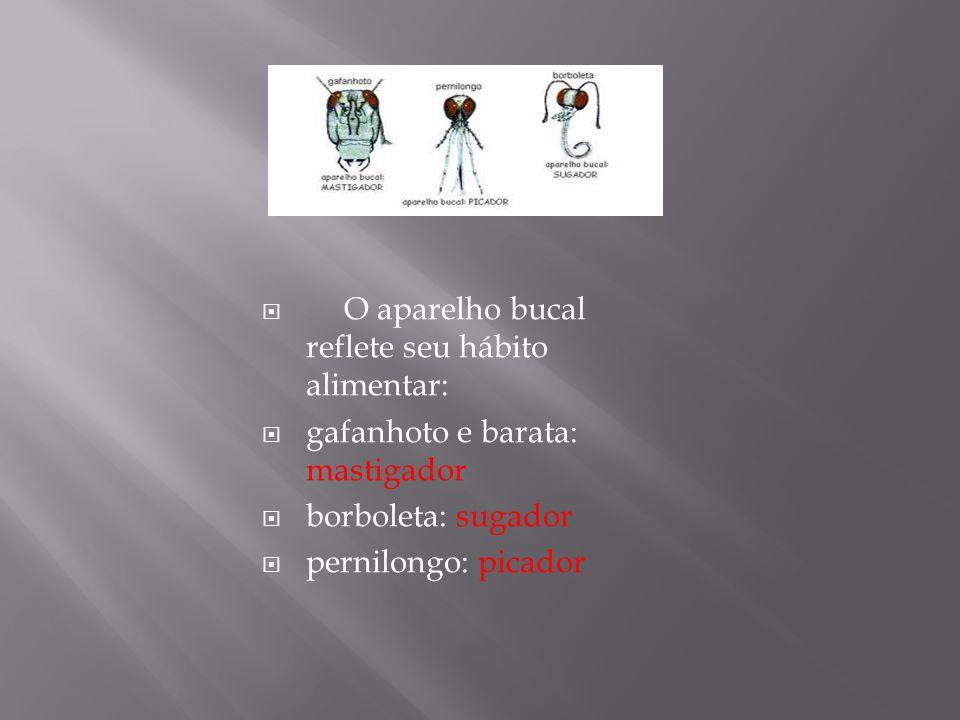 O aparelho bucal reflete seu hábito alimentar: gafanhoto e barata: mastigador borboleta: sugador pernilongo: picador