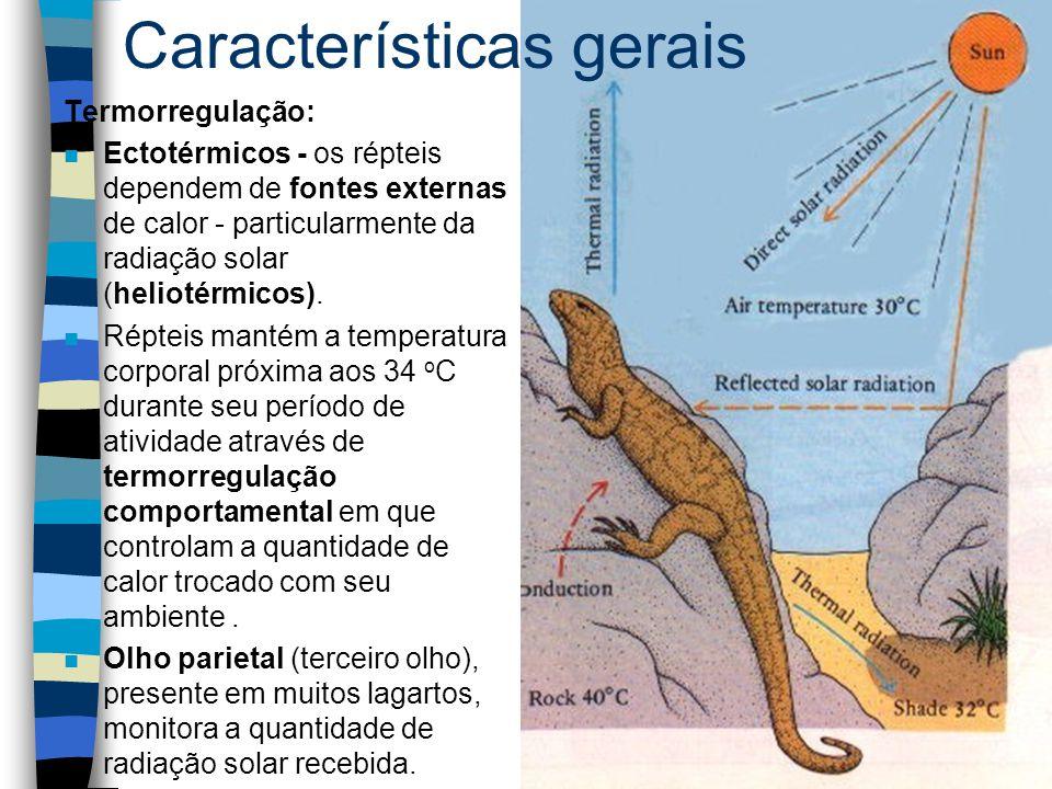 Termorregulação: n Ectotérmicos - os répteis dependem de fontes externas de calor - particularmente da radiação solar (heliotérmicos). n Répteis manté