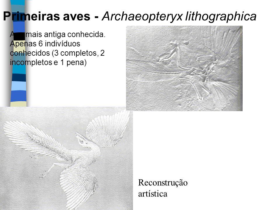 Reconstrução artística Ave mais antiga conhecida. Apenas 6 indivíduos conhecidos (3 completos, 2 incompletos e 1 pena) Primeiras aves - Archaeopteryx