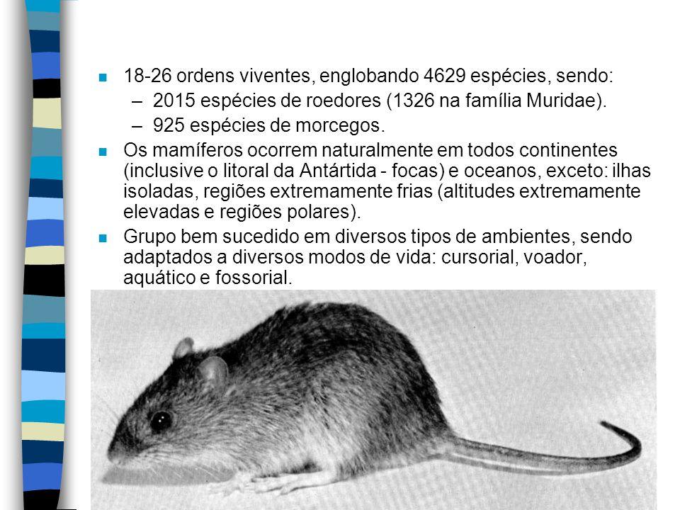 n 18-26 ordens viventes, englobando 4629 espécies, sendo: –2015 espécies de roedores (1326 na família Muridae). –925 espécies de morcegos. n Os mamífe