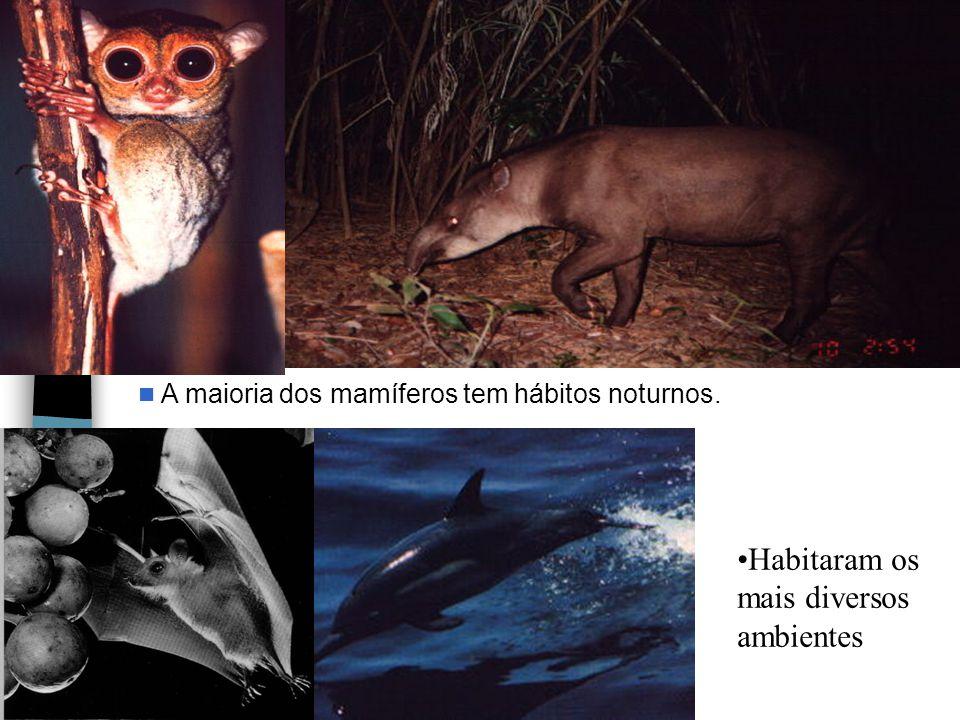 A maioria dos mamíferos tem hábitos noturnos. Habitaram os mais diversos ambientes
