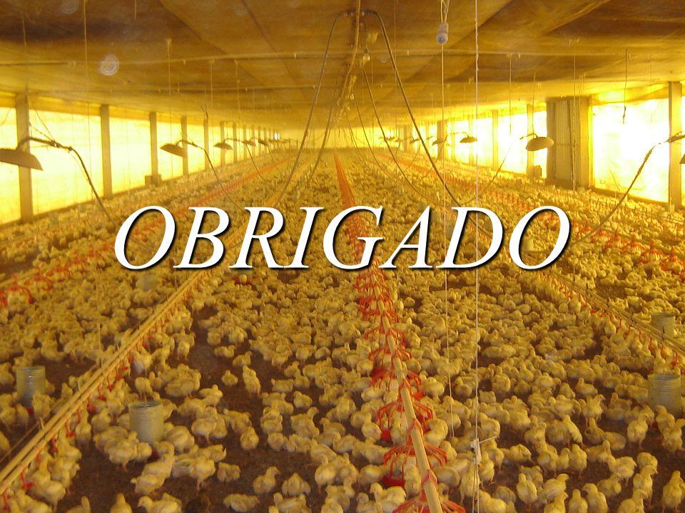 OBRIGADA PELA ATENÇÃO OBRIGADA PELA ATENÇÃO !!! OBRIGADO