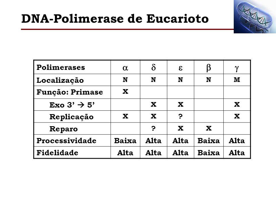 DNA-Polimerase de Eucarioto Polimerases Localização NNNNM Função: Primase X Exo 3 5 XXX Replicação XX?X Reparo ?XX ProcessividadeBaixaAlta BaixaAlta F