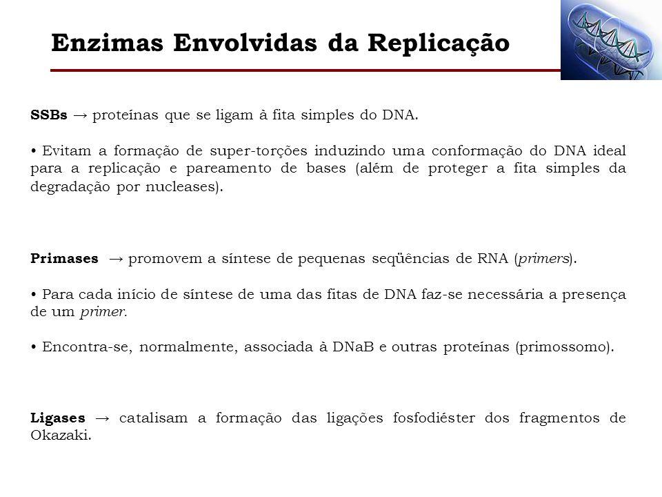SSBs proteínas que se ligam à fita simples do DNA. Evitam a formação de super-torções induzindo uma conformação do DNA ideal para a replicação e parea