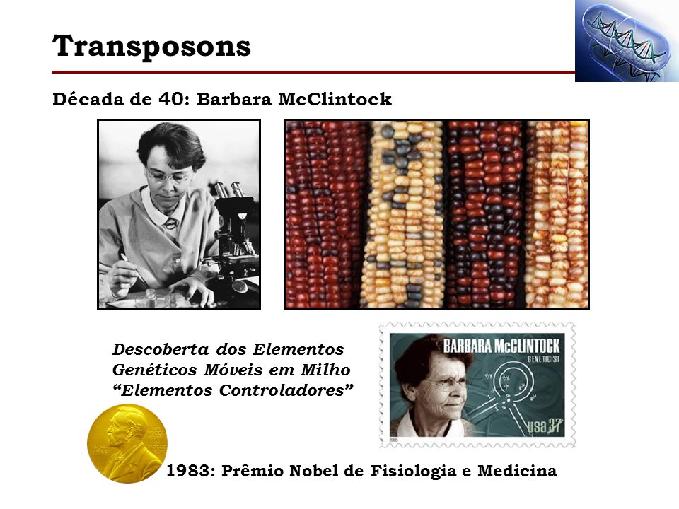 Década de 40: Barbara McClintock Transposons 1983: Prêmio Nobel de Fisiologia e Medicina Descoberta dos Elementos Genéticos Móveis em Milho Elementos