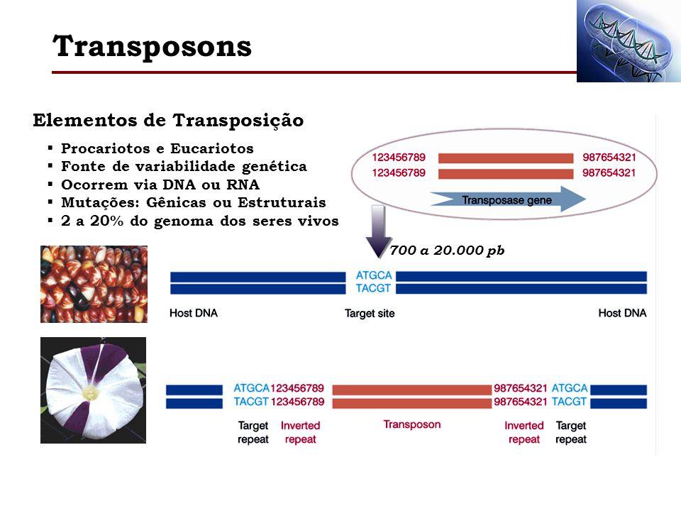 Elementos de Transposição Transposons Procariotos e Eucariotos Fonte de variabilidade genética Ocorrem via DNA ou RNA Mutações: Gênicas ou Estruturais