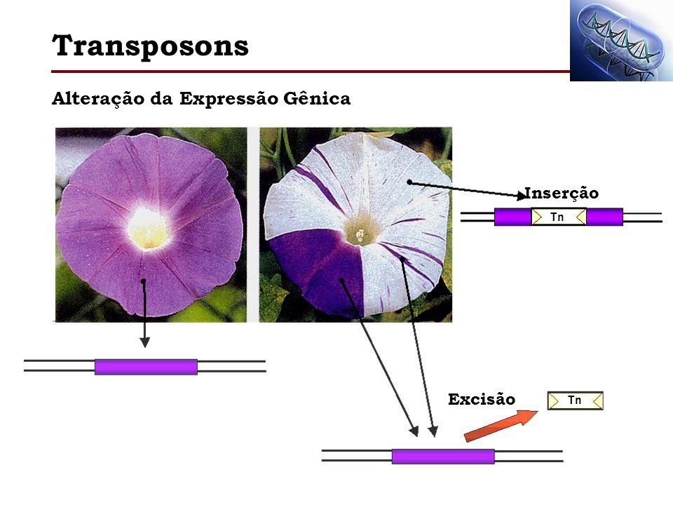 Alteração da Expressão Gênica Transposons Tn Excisão Inserção