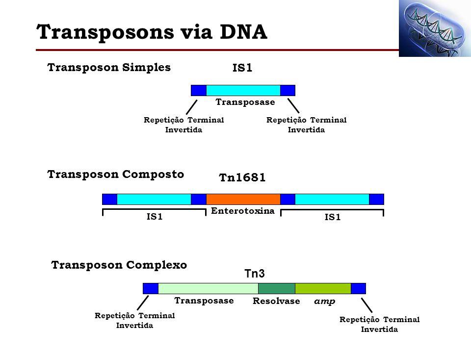 Transposons via DNA Transposon Simples IS1 Transposase Repetição Terminal Invertida Transposon Composto Tn1681 Enterotoxina IS1 Transposon Complexo Tn
