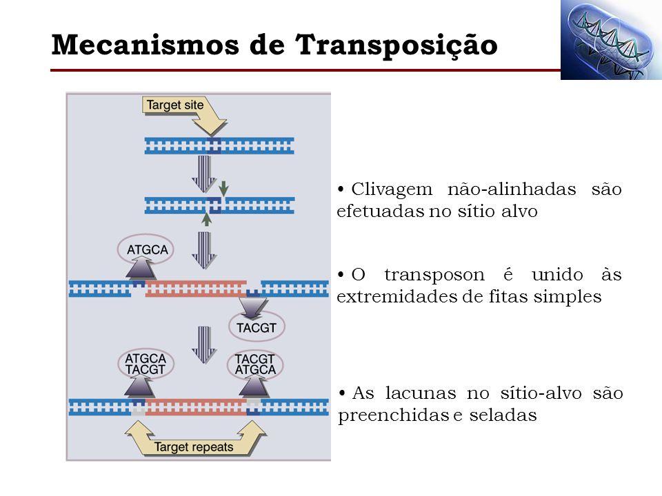 Mecanismos de Transposição Clivagem não-alinhadas são efetuadas no sítio alvo O transposon é unido às extremidades de fitas simples As lacunas no síti