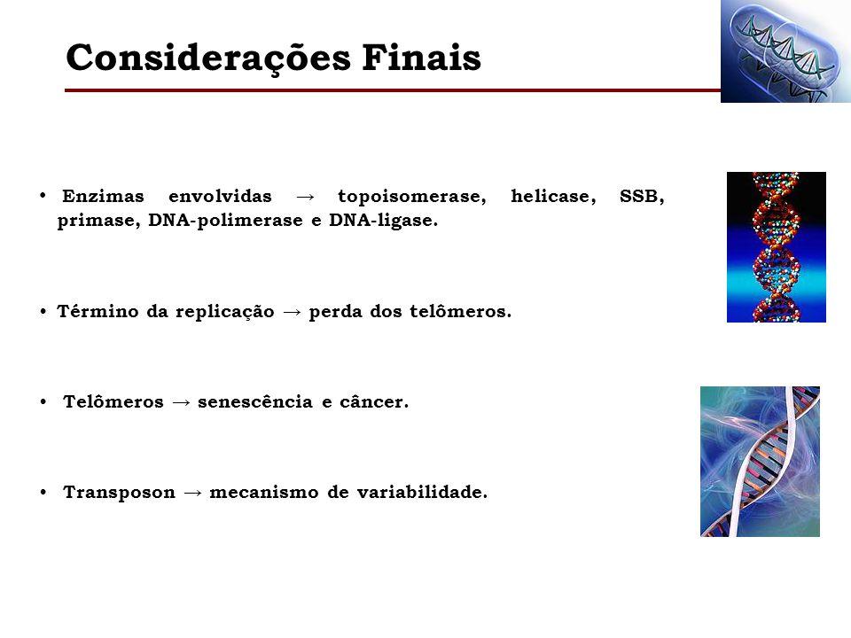 Considerações Finais Enzimas envolvidas topoisomerase, helicase, SSB, primase, DNA-polimerase e DNA-ligase. Término da replicação perda dos telômeros.