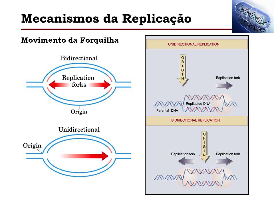 Mecanismos da Replicação Direção da Replicação