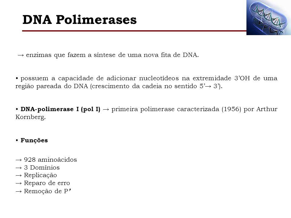 NH 2 COOH Atividade de Exonuclease 5 3 AA 1 324: Remove ~ 10 nt Atividade de Exonuclease 3 5 AA 324 517: Remove 1 nt Atividade de Polimerase AA 521 928: Polimerizar 1956: Arthur Kornberg DNA Polimerases