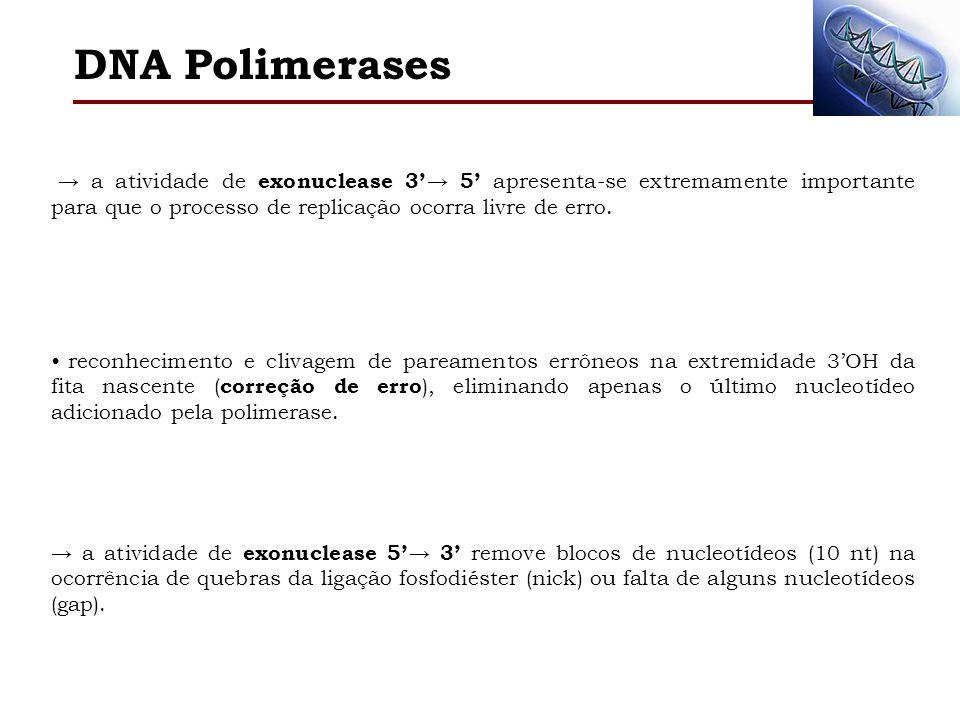 Holoenzima enzima composta por vários grupos polipeptídicos (20 ou +), fundamental no processo replicativo do cromossomo de E.