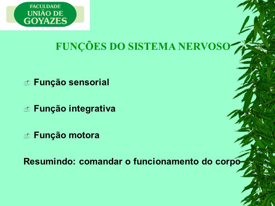 Função sensorial Função integrativa Função motora Resumindo: comandar o funcionamento do corpo FUNÇÕES DO SISTEMA NERVOSO
