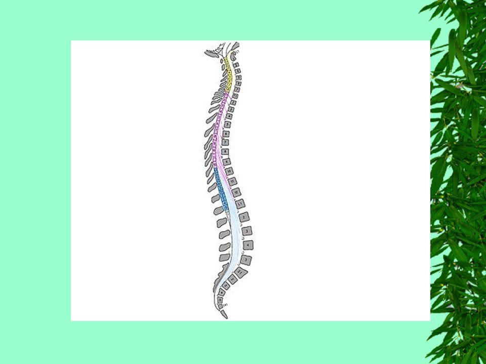 Envoltórios da Medula Como todo sistema nervoso central, a medula é envolvida por membranas fibrosas denominadas meninges, que são: Dura-máter Pia-máter Aracnóide