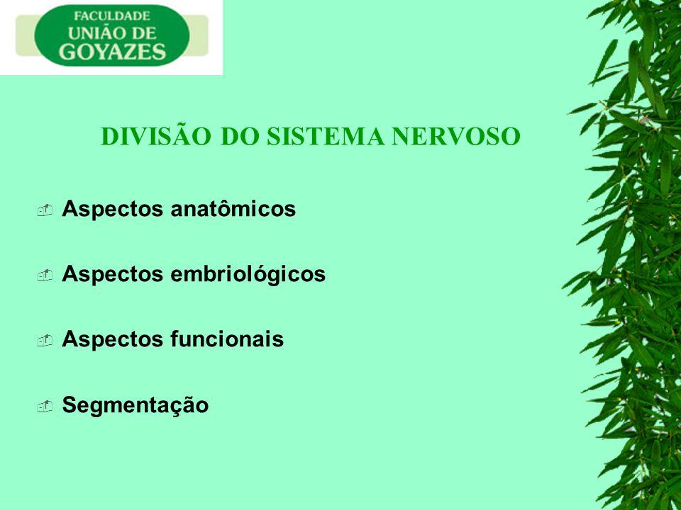 Aspectos anatômicos Aspectos embriológicos Aspectos funcionais Segmentação DIVISÃO DO SISTEMA NERVOSO
