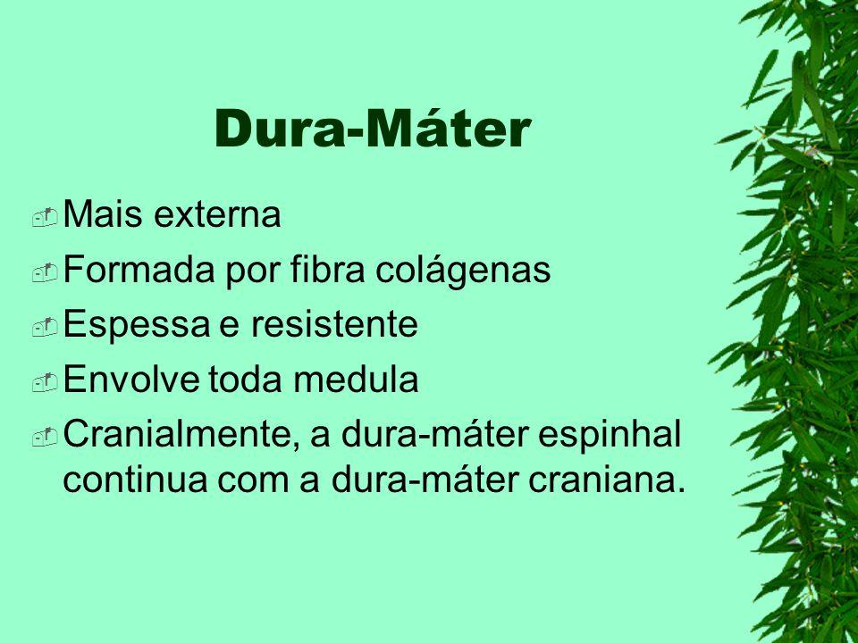 Dura-Máter Mais externa Formada por fibra colágenas Espessa e resistente Envolve toda medula Cranialmente, a dura-máter espinhal continua com a dura-máter craniana.