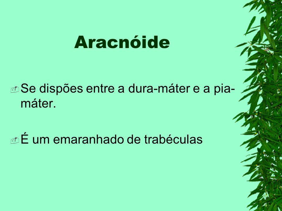 Aracnóide Se dispões entre a dura-máter e a pia- máter. É um emaranhado de trabéculas