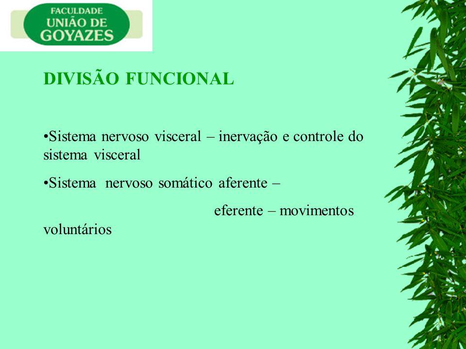 DIVISÃO FUNCIONAL Sistema nervoso visceral – inervação e controle do sistema visceral Sistema nervoso somático aferente – eferente – movimentos voluntários