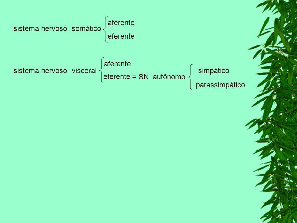 MEDULA ESPINHAL Etimologicamente, significa miolo indica que esta dentro.