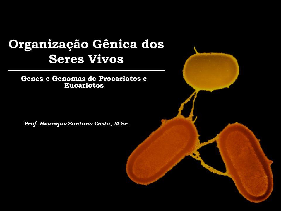 Organização Gênica dos Seres Vivos Genes e Genomas de Procariotos e Eucariotos Prof. Henrique Santana Costa, M.Sc.
