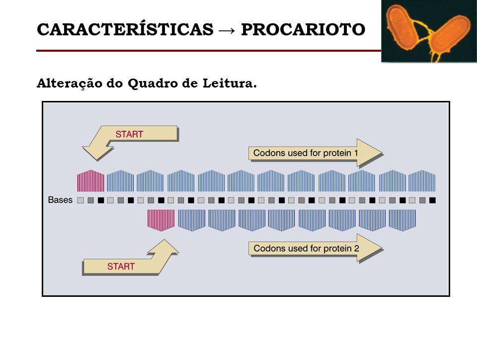 Alteração do Quadro de Leitura. CARACTERÍSTICAS PROCARIOTO