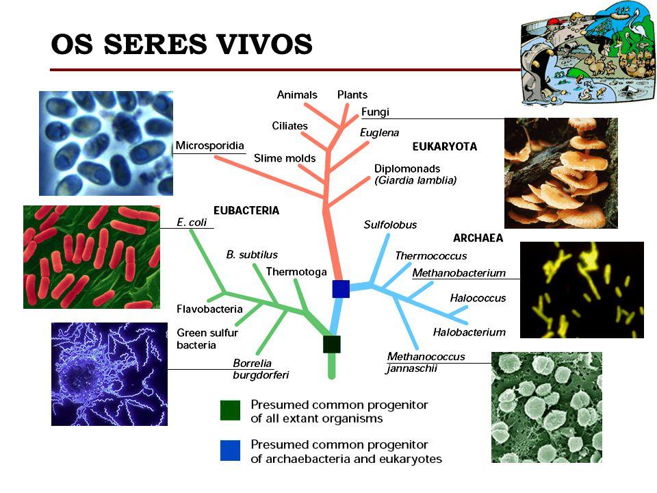 H1 Famílias Funcionalmente Idênticas Histonas Replicação dependente restrito a fase S.