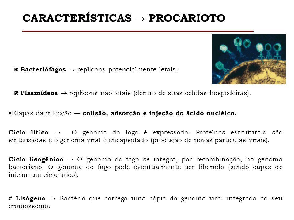Bacteriófagos replicons potencialmente letais. Plasmídeos replicons não letais (dentro de suas células hospedeiras). CARACTERÍSTICAS PROCARIOTO Etapas