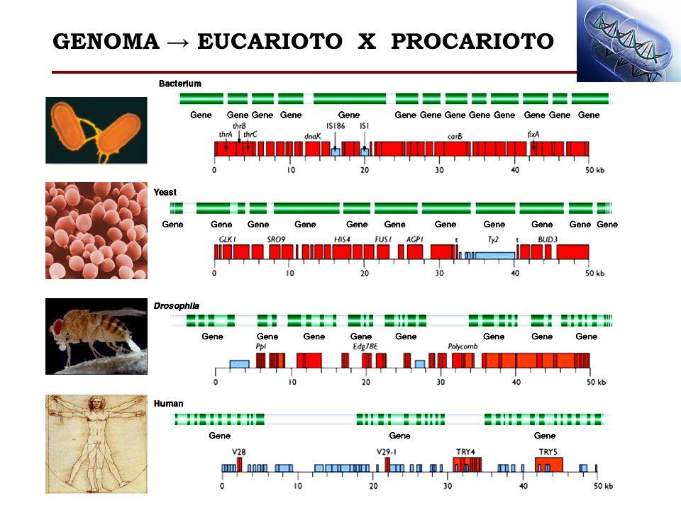 GENOMA EUCARIOTO X PROCARIOTO