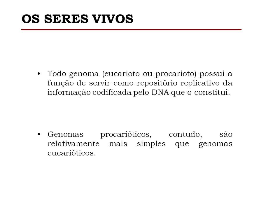 PROCARIOTO X EUCARIOTO Tamanho do genoma. Estrutura molecular. Distribuição de genes.