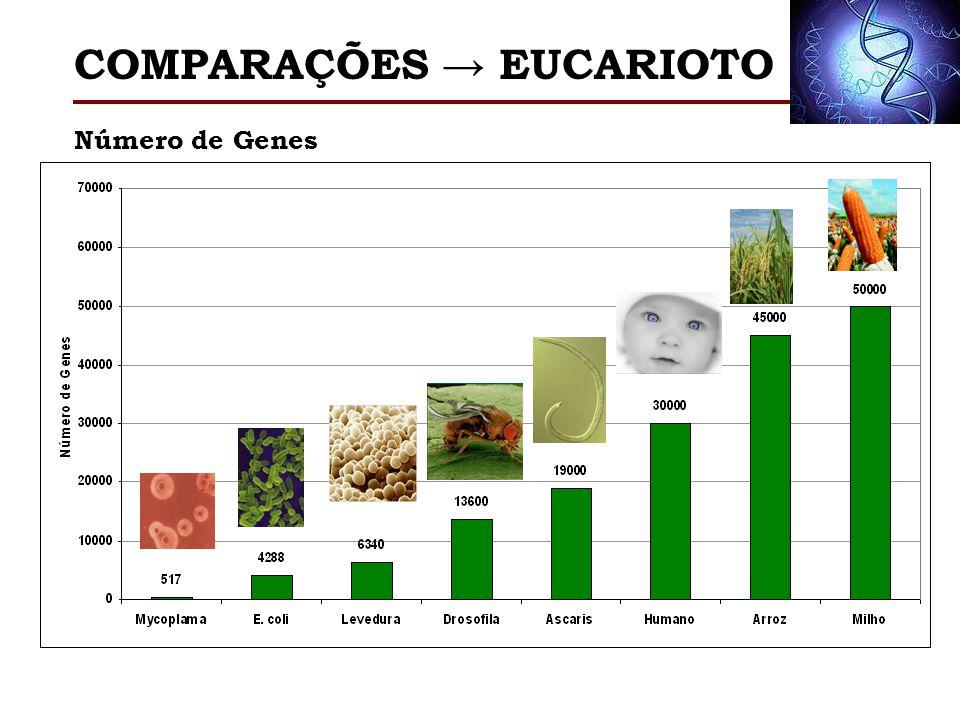Número de Genes COMPARAÇÕES EUCARIOTO