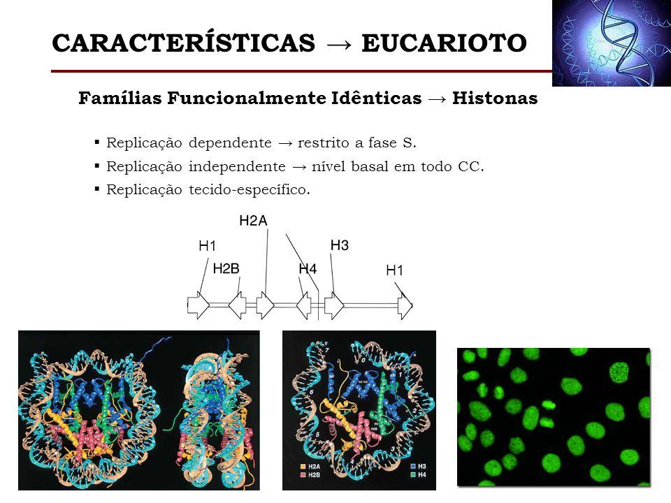 H1 Famílias Funcionalmente Idênticas Histonas Replicação dependente restrito a fase S. Replicação independente nível basal em todo CC. Replicação teci