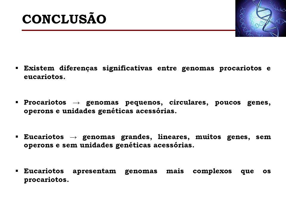 Existem diferenças significativas entre genomas procariotos e eucariotos. Procariotos genomas pequenos, circulares, poucos genes, operons e unidades g