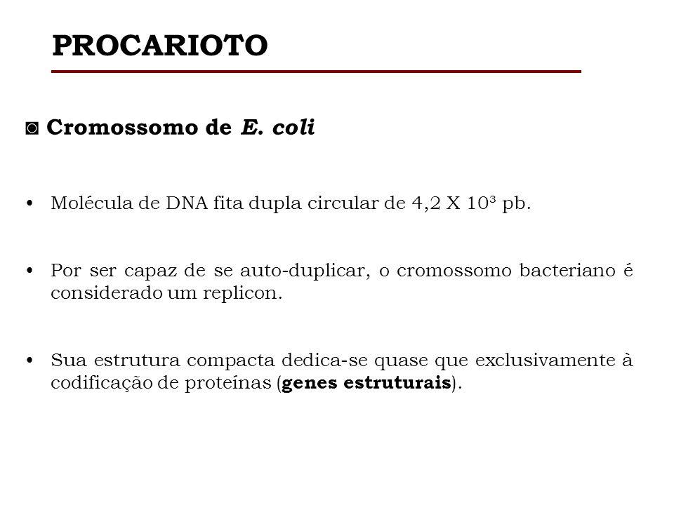 Cromossomo de E. coli Molécula de DNA fita dupla circular de 4,2 X 10³ pb. Por ser capaz de se auto-duplicar, o cromossomo bacteriano é considerado um