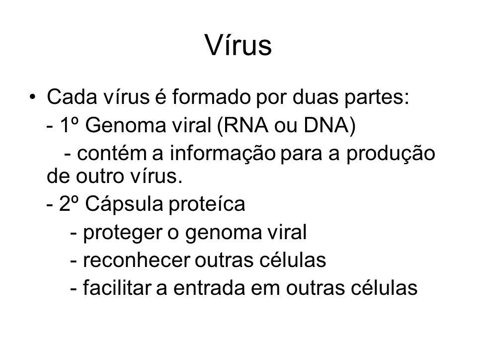 Vírus Cada vírus é formado por duas partes: - 1º Genoma viral (RNA ou DNA) - contém a informação para a produção de outro vírus. - 2º Cápsula proteíca