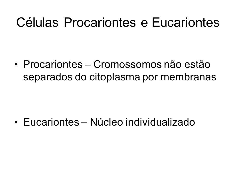 Células Procariontes e Eucariontes Procariontes – Cromossomos não estão separados do citoplasma por membranas Eucariontes – Núcleo individualizado