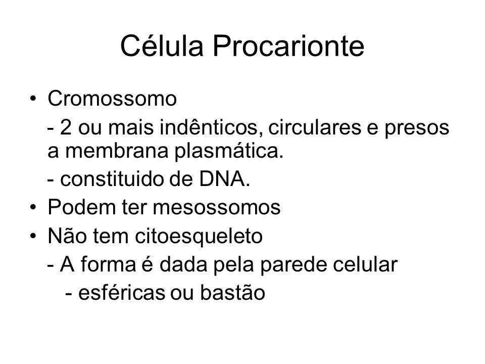 Célula Procarionte Cromossomo - 2 ou mais indênticos, circulares e presos a membrana plasmática. - constituido de DNA. Podem ter mesossomos Não tem ci