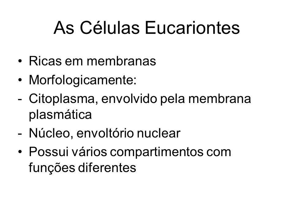 As Células Eucariontes Ricas em membranas Morfologicamente: -Citoplasma, envolvido pela membrana plasmática -Núcleo, envoltório nuclear Possui vários