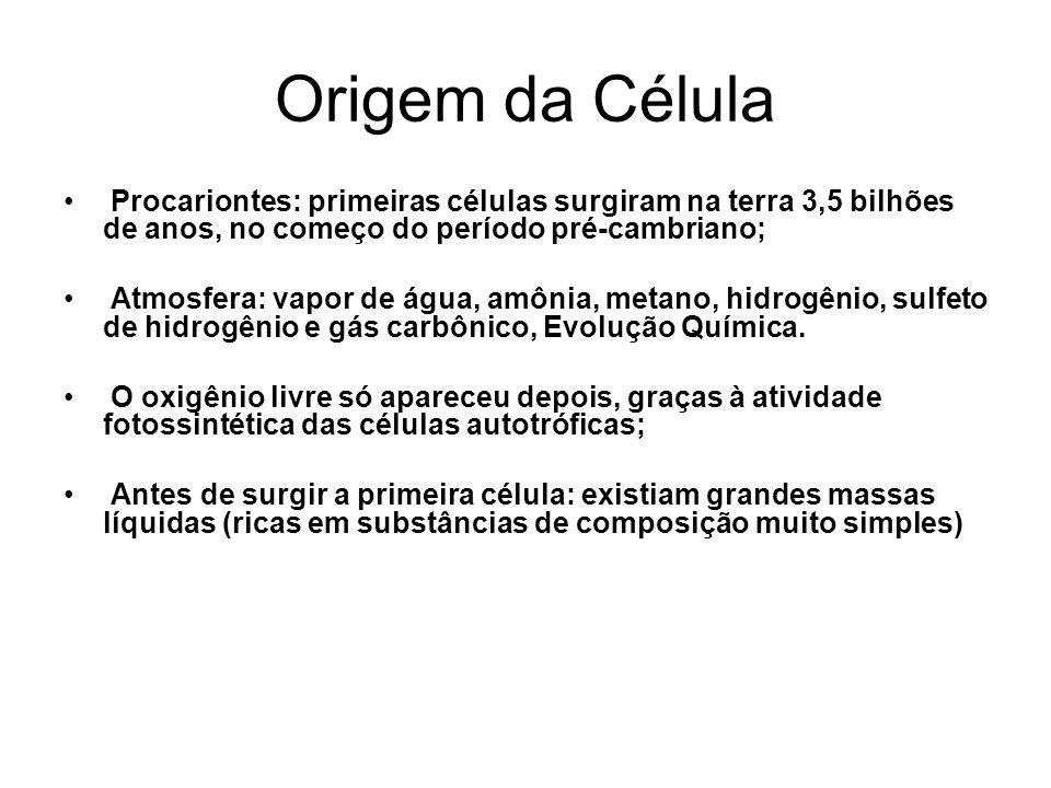 Origem da Célula Procariontes: primeiras células surgiram na terra 3,5 bilhões de anos, no começo do período pré-cambriano; Atmosfera: vapor de água,