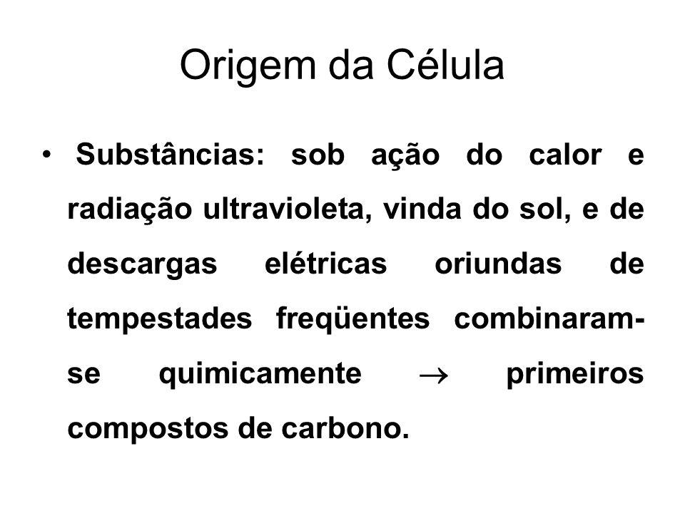 Origem da Célula Stanley Miller (1953 – experimentos fundamentais): produzindo descargas elétricas em um recipiente fechado, contendo vapor de água, Hidrogênio, Metano e amônia, descobriu que se formavam aminoácidos, tais como alanina, glicina.