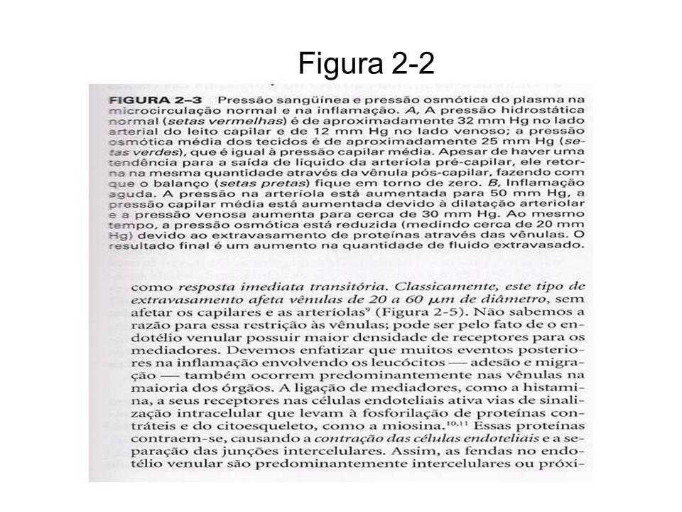 Figura 2-2