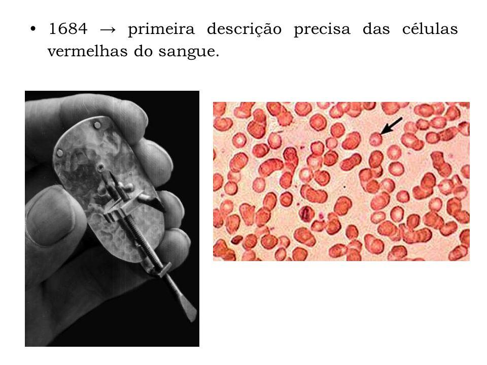 1684 primeira descrição precisa das células vermelhas do sangue.