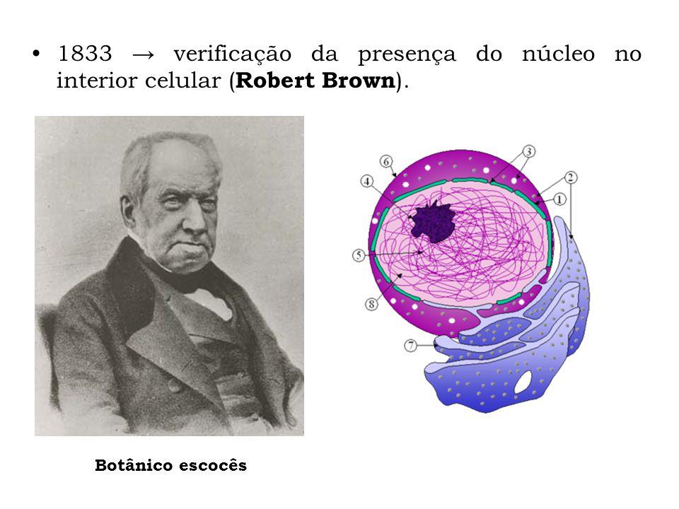 1833 verificação da presença do núcleo no interior celular ( Robert Brown ). Botânico escocês